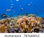 coral reef in carbiiean sea | Shutterstock . vector #787660012