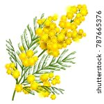 yellow mimosa flower branch... | Shutterstock .eps vector #787665376