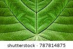 synthetic photosyntesis  ...   Shutterstock . vector #787814875