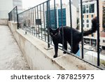Stock photo black cat on the street in istanbul 787825975
