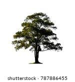 silk tree isolated on white... | Shutterstock . vector #787886455
