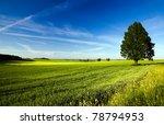 Tree Growing In The Field On...