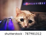 Stock photo ginger cat near the computer keyboard 787981312
