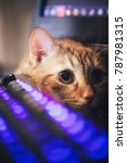 Stock photo ginger cat near the computer keyboard 787981315