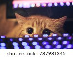 Stock photo ginger cat near the computer keyboard 787981345