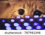 Stock photo ginger cat near the computer keyboard 787981348