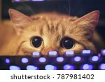 Stock photo ginger cat near the computer keyboard 787981402