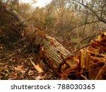 felling of tree. tree felling... | Shutterstock . vector #788030365
