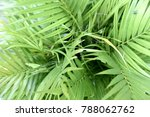 close up palm tree in the...   Shutterstock . vector #788062762