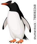 vector illustration of a gentoo ... | Shutterstock .eps vector #788082268