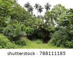 view of a pathway in a tropical ... | Shutterstock . vector #788111185