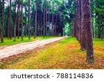 beautiful view pathway in pine... | Shutterstock . vector #788114836