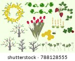 mimosa flowers and spring plant ... | Shutterstock .eps vector #788128555