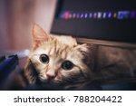 Stock photo ginger cat near the computer keyboard 788204422