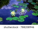 beautiful white water lily... | Shutterstock . vector #788208946