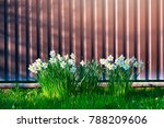 a beautiful flowerbed with... | Shutterstock . vector #788209606
