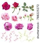 set of roses  anemones  pink ... | Shutterstock .eps vector #788225272