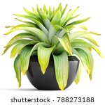 3d illustration tropical plant | Shutterstock . vector #788273188