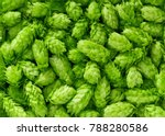 Green Fresh Hop Cones For...