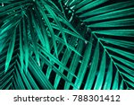 Tropical Palm Leaf  Dark Green...
