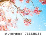 beautiful sakura flower  cherry ... | Shutterstock . vector #788338156