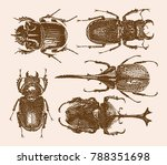 beetle family set 1 | Shutterstock .eps vector #788351698