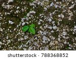 the closeup of small plant in a ... | Shutterstock . vector #788368852