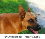dog cute animal canine | Shutterstock . vector #788493358