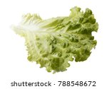lettuce leaf isolated with... | Shutterstock . vector #788548672