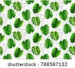 monstera leaves pattern.... | Shutterstock .eps vector #788587132