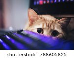 Stock photo ginger cat near the computer keyboard 788605825