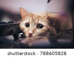 Stock photo ginger cat near the computer keyboard 788605828