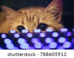 Stock photo ginger cat near the computer keyboard 788605912