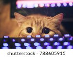 Stock photo ginger cat near the computer keyboard 788605915