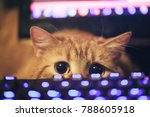 Stock photo ginger cat near the computer keyboard 788605918