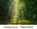 footpath through... | Shutterstock . vector #788625682