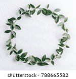 green leaves circle | Shutterstock . vector #788665582