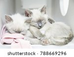 Stock photo two siamese kittens sleeping and cuddling 788669296
