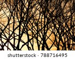 trees in sunset | Shutterstock . vector #788716495