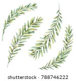 botanical illustrations. floral ... | Shutterstock . vector #788746222