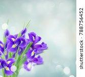 Fresh Blue Irise Flowers Over...