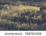 watering vegetables in the... | Shutterstock . vector #788781508