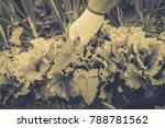 gardening  weeding weeds....   Shutterstock . vector #788781562