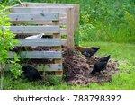 hens working in the garden... | Shutterstock . vector #788798392