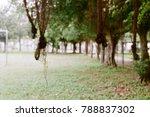 the banyan tree 's roots... | Shutterstock . vector #788837302