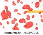 petals flower of roses. flying...   Shutterstock .eps vector #788893216