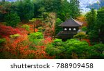 beautiful autumn leaves at...   Shutterstock . vector #788909458