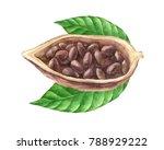 ripe watercolor cocoa beans... | Shutterstock . vector #788929222