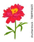 vector drawing of red peony... | Shutterstock .eps vector #788993605