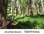 monarch butterfly sanctuary... | Shutterstock . vector #788994466